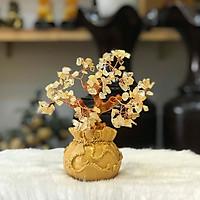 Cây Tài Lộc Thạch Anh Vàng Chậu Túi Vàng