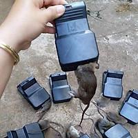 KẸP BẪY CHUỘT THÔNG MINH- kẹp chuột