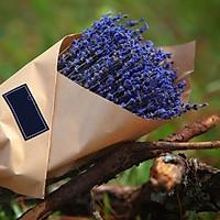 Bó Hoa Khô Lavender Tự Nhiên Nhập Khẩu Pháp - 300 Gram (330 Cành) - Mùi Thơm Từ Hoa Oải Hương Có Thể Làm Dịu Tinh Thần - Tránh Tình Trạng Mất Ngủ - Lo Lắng Quá Mức Và Shock Thần Kinh.