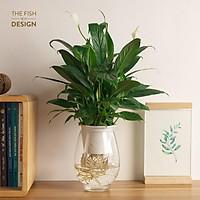 Bình cây lan ý thủy sinh | THE FISH SIZE L ( trang trí trong nhà, để bàn làm việc,..)