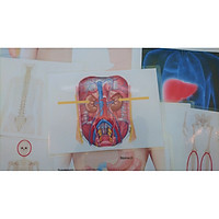 Internal Body Part Flashcards - Bộ thẻ học tiếng Anh chủ đề bộ phận cơ thể - Các bộ phận bên trong - 15 thẻ