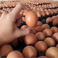 [Chỉ giao HCM] Q8 trứng gà trứng vịt hột vịt lộn giao các quận 1 2 3 4 5 6 7 8 10 11
