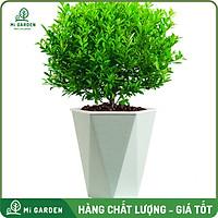 Chậu lúa mạch tự tưới Mi Garden, chậu có 2 lớp tự tưới, chậu cây tự dưỡng giúp bạn trồng cây dễ dàng trong gia đình hoặc văn phòng.