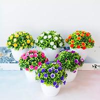 Chậu cây hoa mini để bàn làm việc kích thước 15x14cm