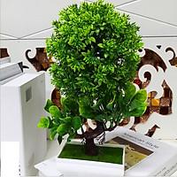Chậu Hoa Bonsai trang trí để bàn màu Xanh