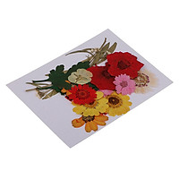 1 Set Natural Pressed Flowers Rose / Daisy / Larkspur / Myosotis Dried Pressed Flowers DIY Phone Case Decoration