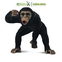 Mô hình thu nhỏ: Tinh Tinh bố - Chimpanzee Male, hiệu: CollectA, mã HS 9651031[88492] -  Chất liệu an toàn cho trẻ - Hàng chính hãng