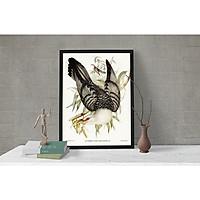Tranh Canvas  Động vật Chim cu gáy (Elizabeth Gould 1804—1841) cao cấp. (Bộ 1 bức), Khung hợp nhôm chống ẩm, bền, đẹp, nhiều kích thước. Phù hợp nhiều không gian sang trọng.