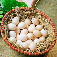 Trứng gà ta nuôi thả Hoà Bình - 10 quả