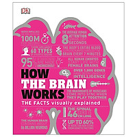 How The Brain Works: The Facts Visually Explained (How It Works)