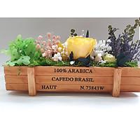 Hộp hoa khô vườn hoa