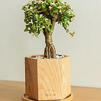 Chậu cây khuy áo bonsai | THE FISH SIZE L ( trang trí trong nhà,để bàn làm việc,...)