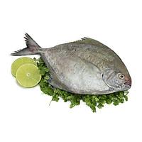 [Chỉ Giao HCM] - Cá Chim Đen Phú Quốc, Hải Sản Biển Tự Nhiên Túi 500Gr - Foodmap
