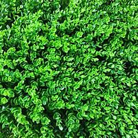 Thảm cỏ trang trí tường