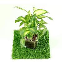Tấm cỏ trang trí lót chậu cây 30 x 30cm