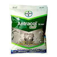 THUỐC TRỪ NẤM BỆNH CÂY TRỒNG ANTRACOL - 100 GRAM - DIÊT MẦM NẤM BỆNH NHƯ THÁN THƯ, ĐỐM LÁ, BỆNH Ở RỄ