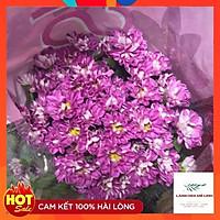 Hoa cúc cắt cành Rossi Đà Lạt , có hình dáng nhỏ nhắn, mùi thơm dịu dàng