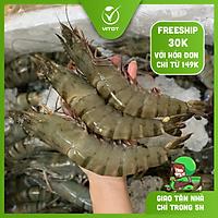 [CHỈ GIAO HN] - VITOT FOOD TÔM SÚ QUẢNG CANH (15- 16 con/kg)