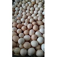 [Chỉ giao HN] Trứng gà CN - 10 quả
