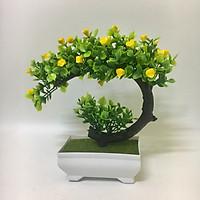 Chậu cây bonsai phú quý - Chậu cây cảnh để bàn