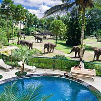 Vé Elephant Safari Park Bali, Indonesia