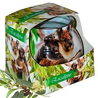 Ly nến thơm tinh dầu Admit Eucaliptus 85g QT01883 - hương bạch đàn