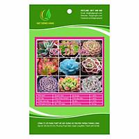 Hạt giống hoa Sen đá Mix Golden Seeds 10 Hạt