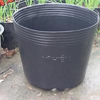 combo 100 Chậu nhựa trồng cây C9A 23x18x17 -77104