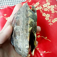 Mai Rùa Phong Thủy