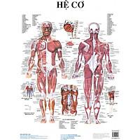 Bộ tranh giải phẫu (13 tờ)