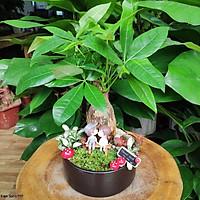 Cây Kim Ngân phối tiểu cảnh, cây Kim Ngân để bàn, cây Kim Ngân phong thủy đẹp, mang lại tài lộc cho gia chủ