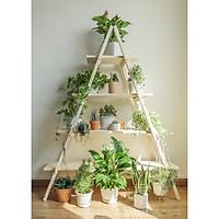 Kệ 2 thang tam giác/ Kệ gỗ thông Decor, để cây, trang trí nhà cửa