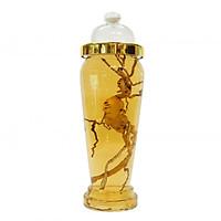 Bình Thủy Tinh Ngâm Rượu Hàn Quốc 7 Lít - Bình Bầu Có Núm