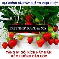 Gói 50 Hạt giống Dâu Tây Quả To, Chịu nhiệt (Tặng gói kích mầm, kèm hướng dẫn gieo) free ship toàn quốc hạt giống hoa