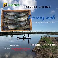 Tôm Càng xanh OXY NIDTICO-Đông IQF (21-25con/kg)