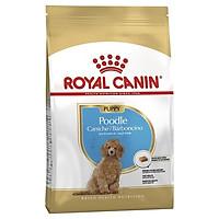 Thức ăn cho chó Royal Canin Poodle Puppy 500gr