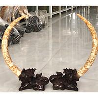 cặp kỳ lân ngậm ngà voi cao 70 cm