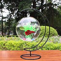 Bể cá mini Cung Trăng 20