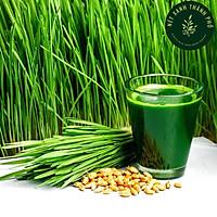 Hạt giống mầm cỏ lúa mì đỏ, cỏ mạch, cỏ mèo