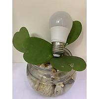 Bóng Bulb nấm - RB LIGHTING