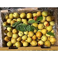 [Chỉ giao HCM] q8 Hồng táo loại đặc biệt nhập khẩu túi 500gr trái cây tươi