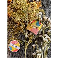 Nước hoa khô Gobo - Hương thơm dẫn lối cảm xúc