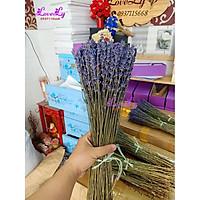 Bó hoa oải hương Lavender khô nhập Pháp 200 cành Tặng Túi Thơm Nụ Hoa Lavender