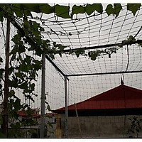 Lưới làm giàn leo - lưới trồng cây