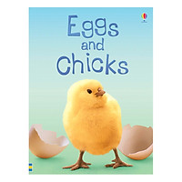 Usborne Eggs and Chicks