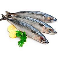 Cá nục bông Nhật Bản - Hàng đông lạnh nhập khẩu - 1kg