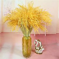 Combo 5 bông lúa vàng ý nghĩa phong thủy