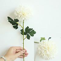 Hoa Giả - Combo 10 Cúc Pingpong Bông Lớn