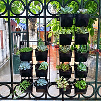 Bộ module [khung & chậu] vườn tường đứng [JUPIWALL-Mini]: Hàng xuất khẩu, dễ tháo lắp, chuyên dụng trồng sen đá, cây nội thất nhỏ, trang trí sân vườn, ban công, Trong nhà.