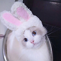 Mũ tai thỏ hóa trang cho chó mèo